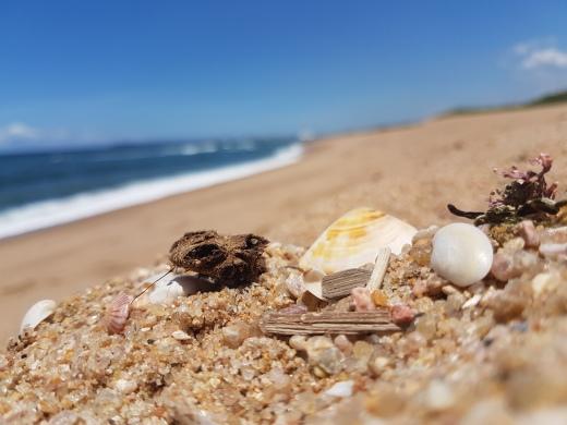moniquevanderwalt_durban_southafrica_sea_waves_shore_beach_kwazulunatal_journey_plan_nature_autobiography_influencer_freedom_capture-401