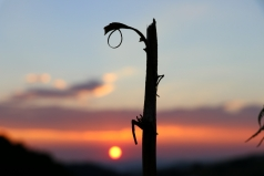moniquevanderwalt_kwazulunatal_southafrica__canon_photography_Drakensberg_bulwer_wildsky_paragliding_canon_photography (772)