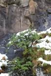 Moniquevanderwalt_SaniPass_Kwazulunatal_southafrica_snow (20)