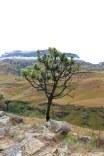 Moniquevanderwalt_SaniPass_Kwazulunatal_southafrica_snow (25)