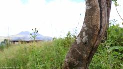 moniquevanderwalt_bulwer_kwazulunatal_southafrica_marutswa_forest (10)