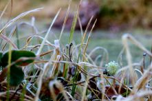 moniquevanderwalt_southafrica_kwazulunatal_drakensberg_bulwer_travel_tourism_weather_nerd_photography_frosted_grass (3)