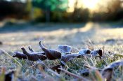 moniquevanderwalt_southafrica_kwazulunatal_drakensberg_bulwer_travel_tourism_weather_nerd_photography_frosted_grass (5)