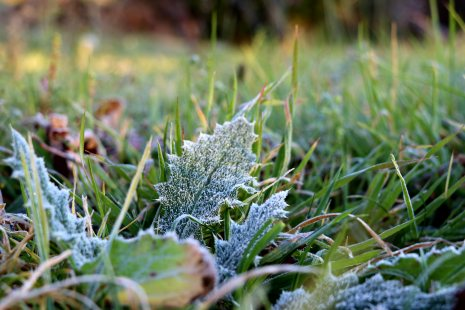 moniquevanderwalt_southafrica_kwazulunatal_drakensberg_bulwer_travel_tourism_weather_nerd_photography_frosted_grass (6)