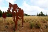 moniquevanderwalt_photography_southafrica_midlandsmeander_brahmanhills_n3gateway_kwazulunatal_tourism_canon_idotourism_wedotourism_cows (55)-2-2