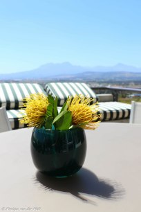moniquevanderwalt_chocolatebox_gordonsbay_capetown_photography (32)